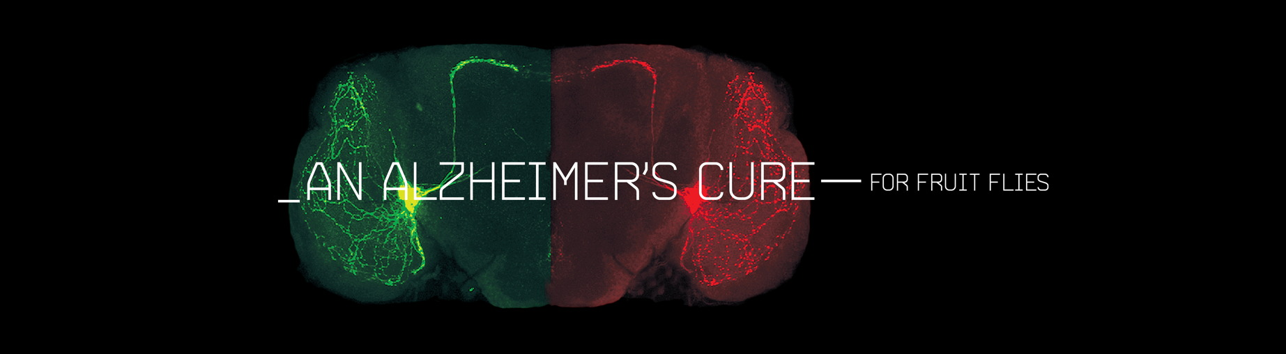 An Alzheimer's Cure — with Fruit Flies