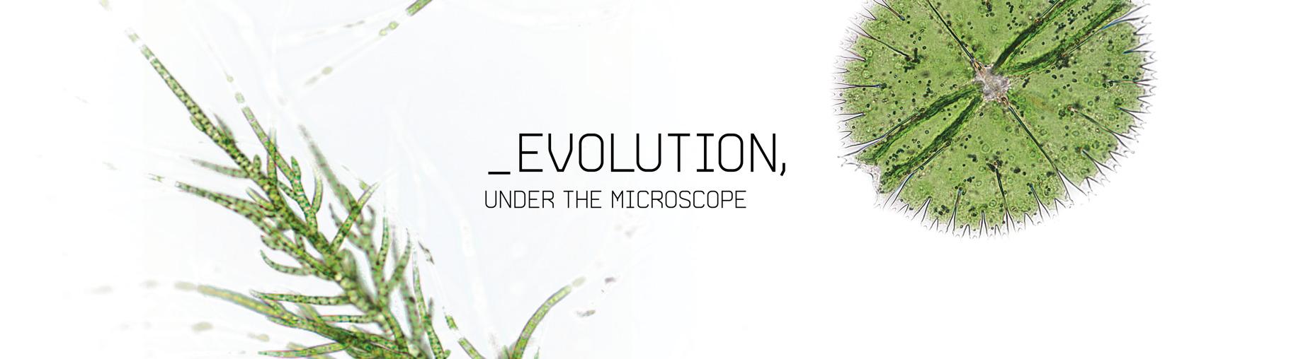 Evolution, Under the Microscope