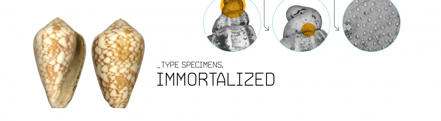 Type Specimens, Immortalized