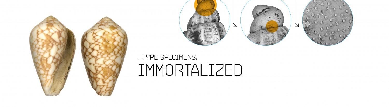 Type Specimens, Immortalized