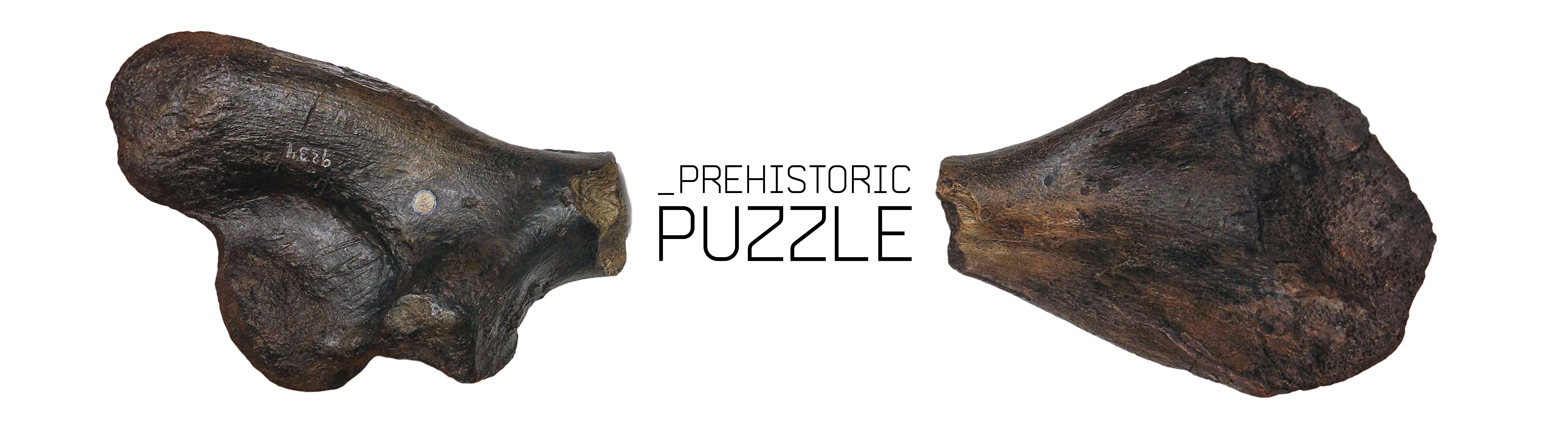 Prehistoric Puzzle