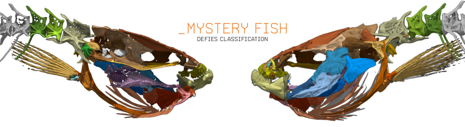 Mystery Fish Defies Classification