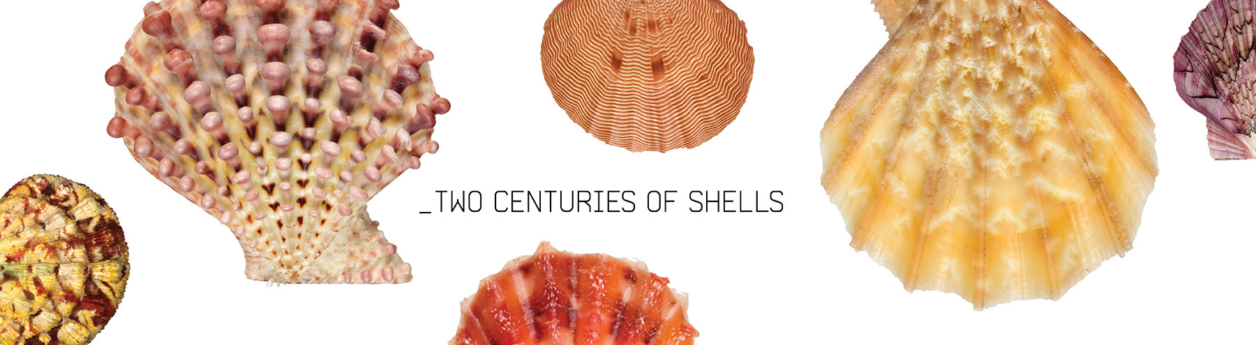Two Centuries of Shells