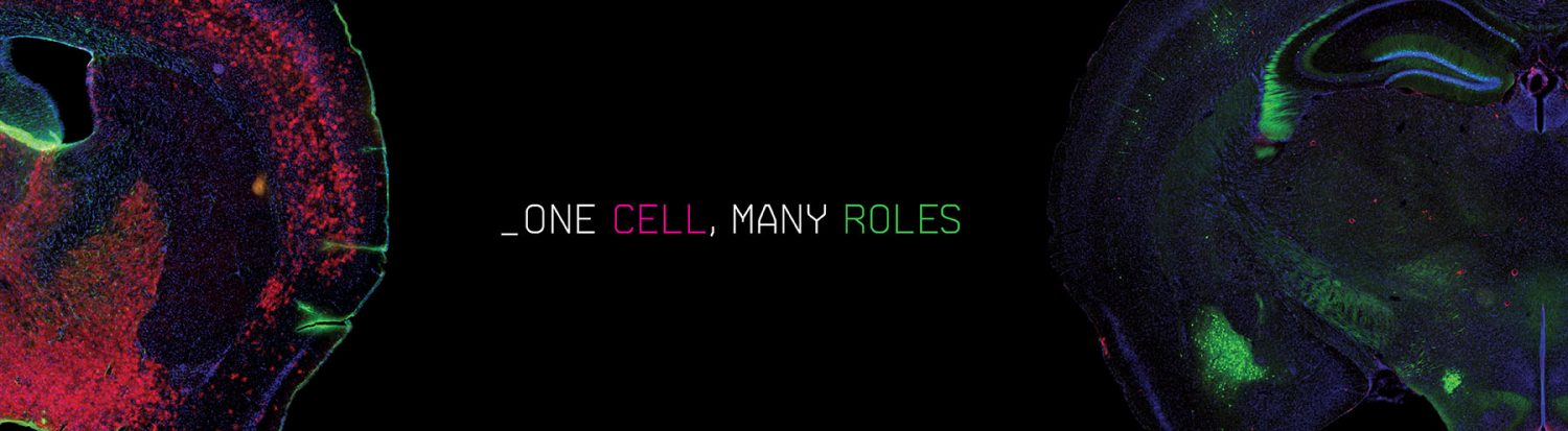 One Cell, Many Roles