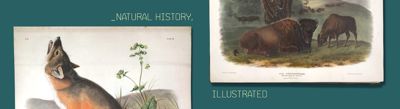 Natural History,  Illustrated